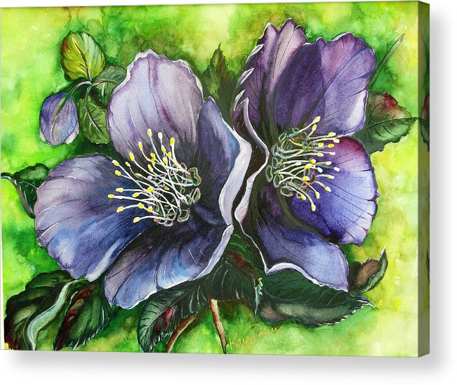 Flower Painting Botanical Painting Original W/c Painting Helleborous Painting Acrylic Print featuring the painting Helleborous Blue Lady by Karin Dawn Kelshall- Best