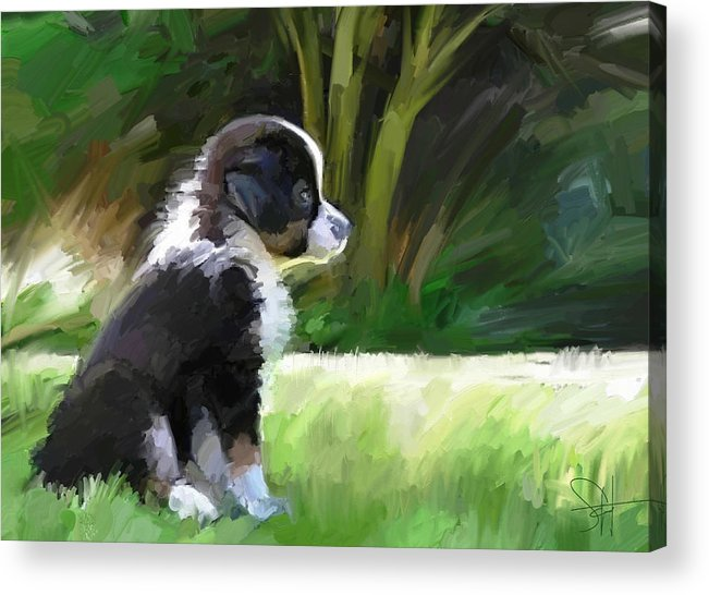 Aussie Dog Collie Acrylic Print featuring the digital art Ku'uipo by Scott Waters