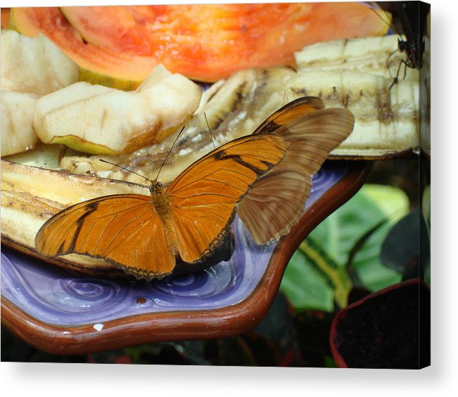 Butterfly Acrylic Print featuring the photograph Lunch Time by Robyn Leakey