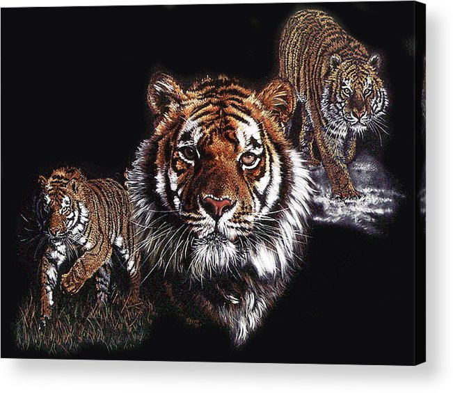 Panthera Acrylic Print featuring the drawing Myth Fable and Fantasy by Barbara Keith