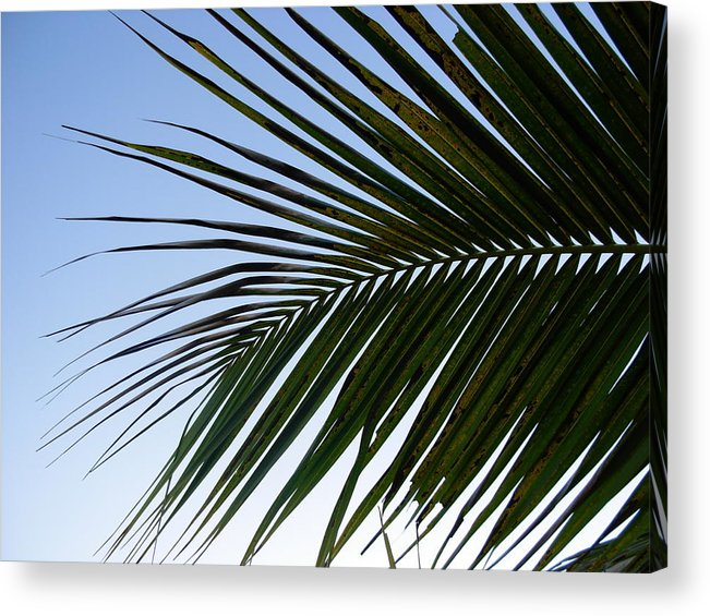 Palm Tree Acrylic Print featuring the photograph Palms to the Sky by Amanda Vouglas