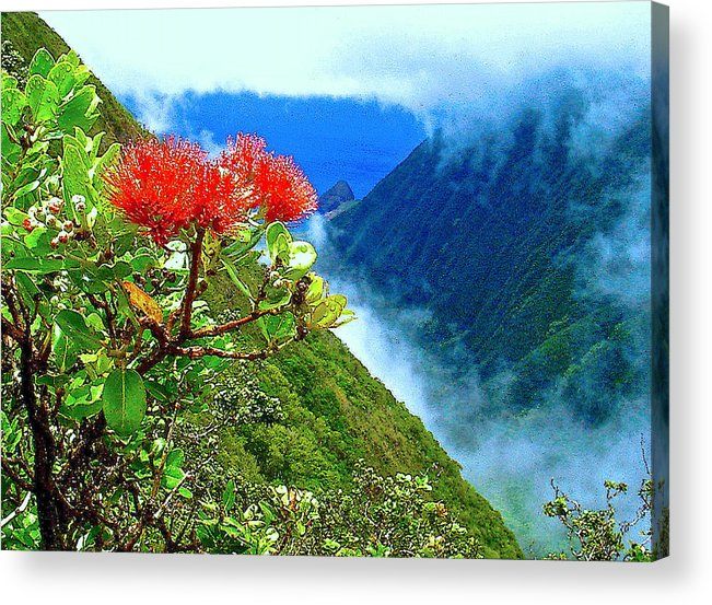 Ohia Lehua Acrylic Print featuring the photograph Peles Flower by James Temple