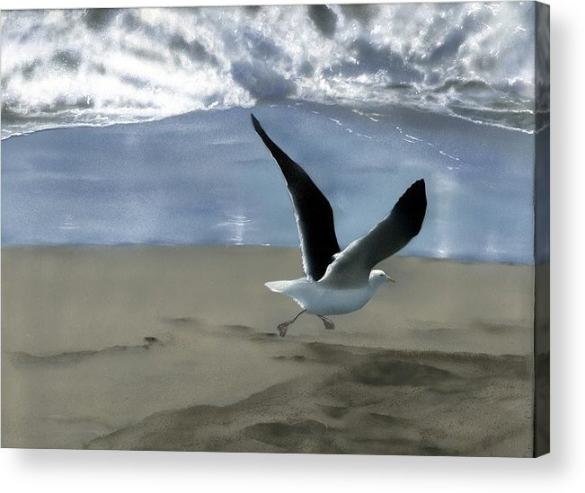 Gull Acrylic Print featuring the painting Running Gull by Charles Parks