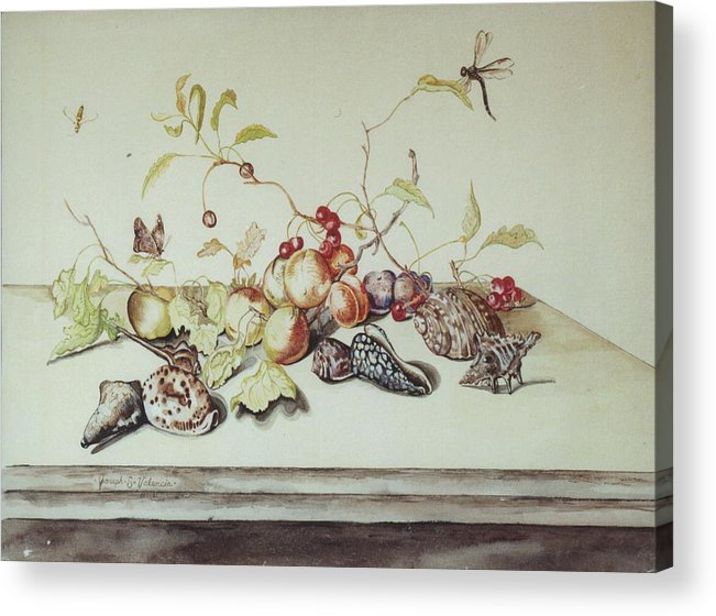 Still Life Fruit Shells Insects Acrylic Print featuring the painting Sea Shells by Joseph Valencia