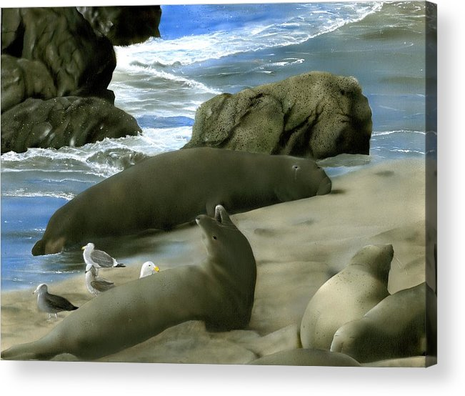 Elephant Seals Acrylic Print featuring the painting Seal Rock by Charles Parks