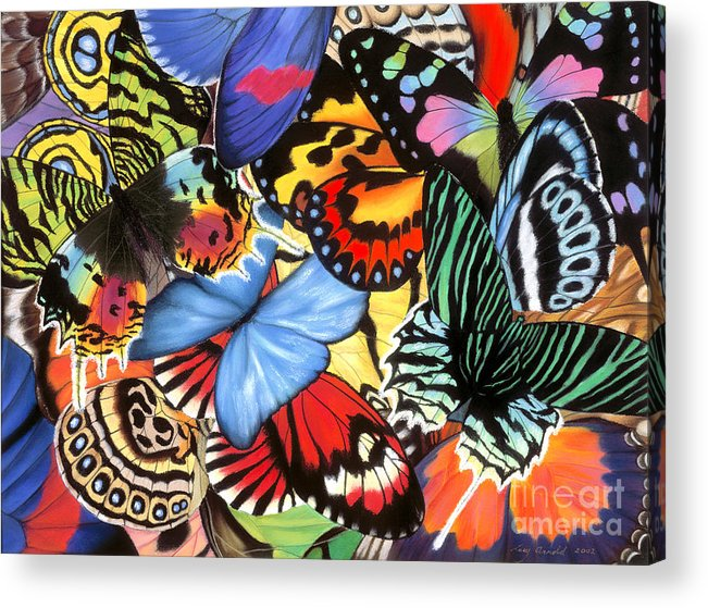 Butterflies Acrylic Print featuring the painting Tropical Wings by Lucy Arnold