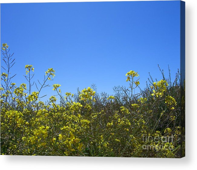 Flowers Acrylic Print featuring the photograph Vista Flores by Jim Thomson