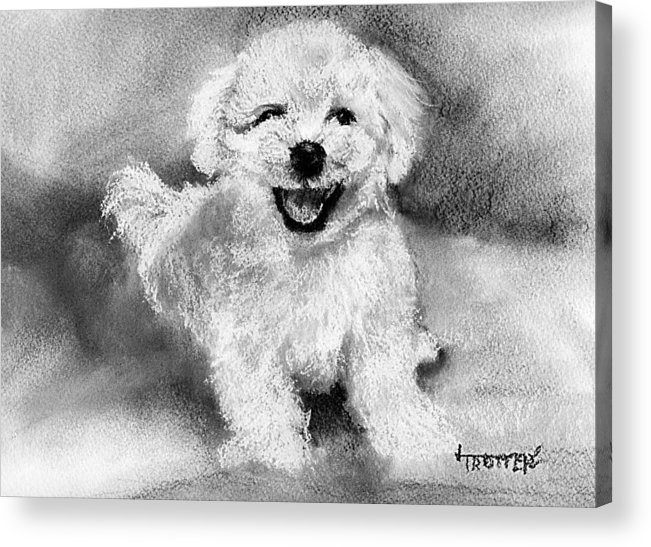 Animal Acrylic Print featuring the drawing What Bichons Do That Makes You Smile by Jimmie Trotter