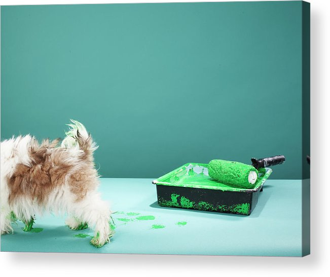 Pets Acrylic Print featuring the photograph Puppy Making Green Paw Prints From by Martin Poole