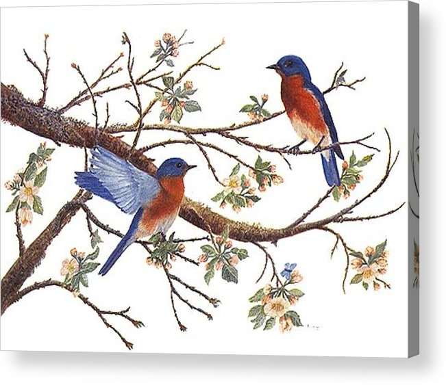 Bluebirds Acrylic Print featuring the painting Bluebirds And Apple Blossoms by Ben Kiger