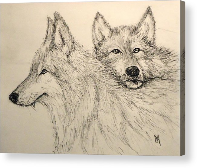 Wolves Acrylic Print featuring the drawing Timberwolf by Pete Maier