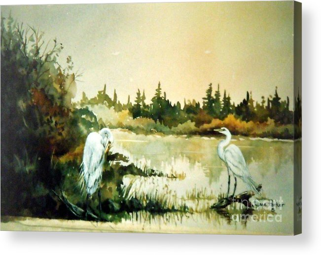 Egret Pair At Lake Acrylic Print featuring the painting  Egrets at Dead Lake by Lynne Parker