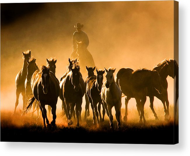 Horses Wrangler Ranching Acrylic Print featuring the photograph Driving the Herd by Lourie Zipf