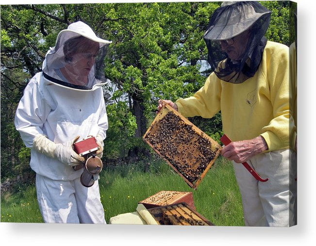 Apis Mellifera Acrylic Print featuring the photograph Beekeepers Inspecting A Beehive by Simon Fraser/science Photo Library