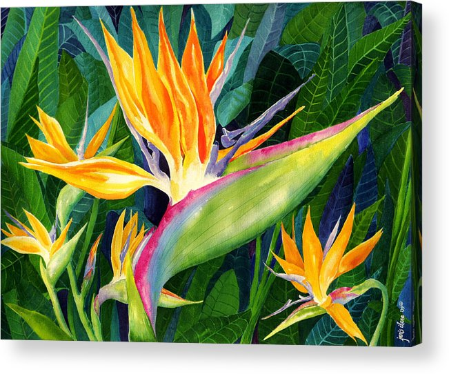 Flower Paintings Acrylic Print featuring the painting Bird-of-Paradise by Janis Grau
