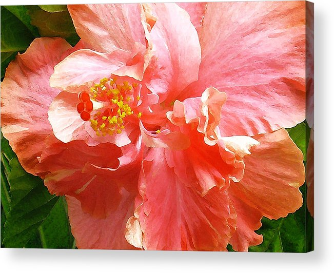 Hibiscus Acrylic Print featuring the digital art Bright Pink Hibiscus by James Temple