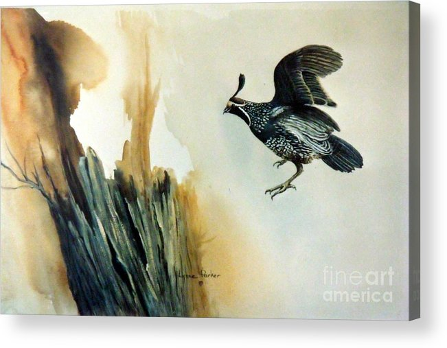 California Quail In Flight Acrylic Print featuring the painting California Quail by Lynne Parker
