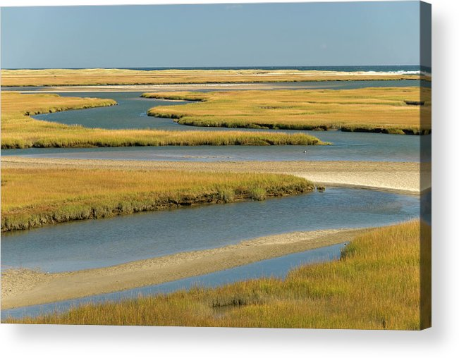 Grass Acrylic Print featuring the photograph Cape Cod Wetlands by Frankvandenbergh