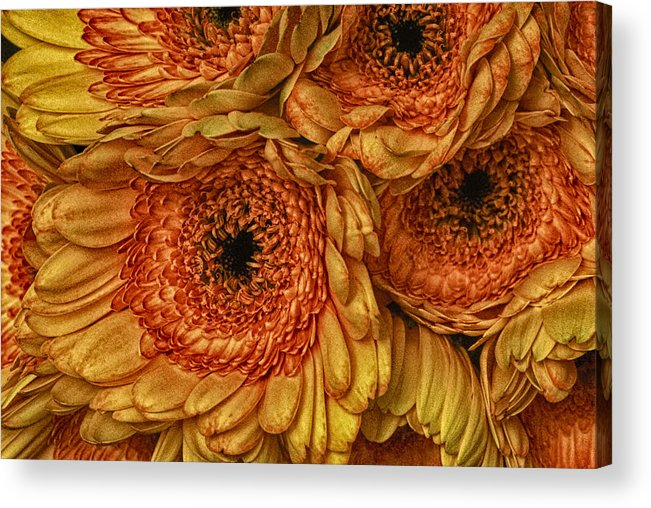 Daisy Acrylic Print featuring the photograph Daisy Daisy by Keith Gondron