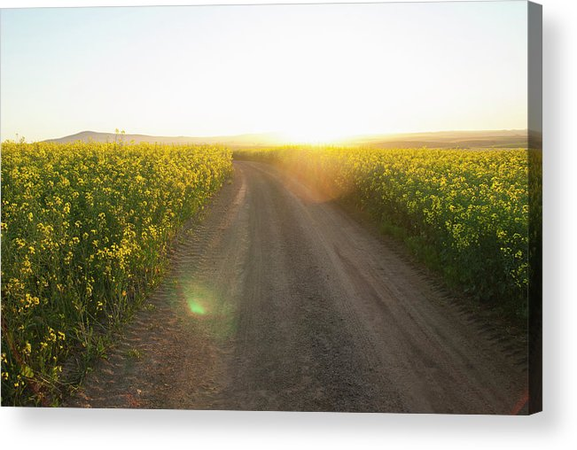 Tranquility Acrylic Print featuring the photograph Dirt Road In Field Of Flowers by Luka
