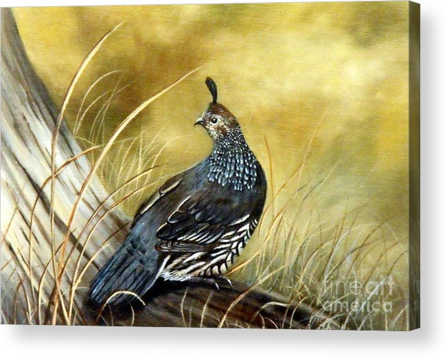 Quail Sunning Acrylic Print featuring the painting Quail on log by Lynne Parker