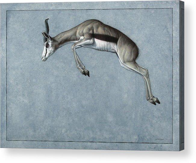 Springbok Acrylic Print featuring the painting Springbok by James W Johnson