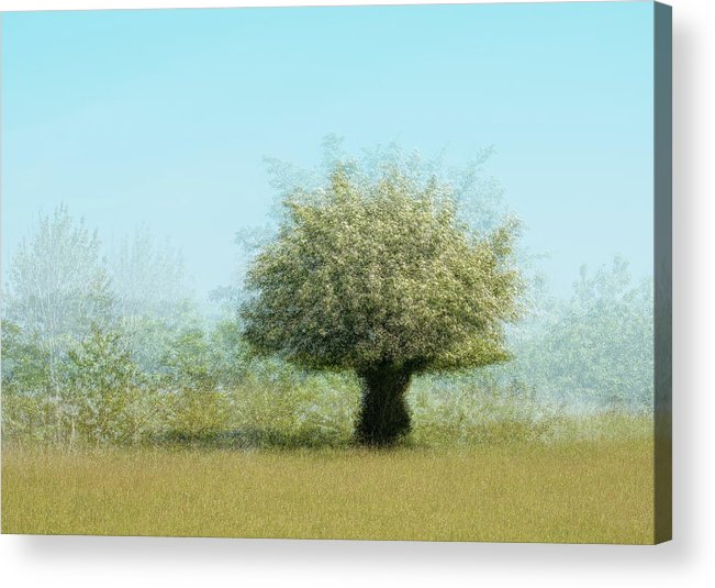 Lonely Tree Acrylic Print featuring the photograph Tree With Flowers by Katarina Holmstr??m