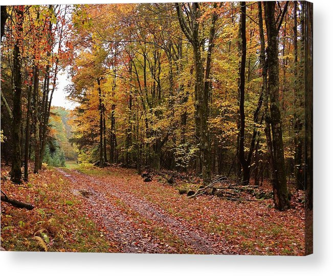 Landscape Acrylic Print featuring the photograph Woods walk by Lisa Kane