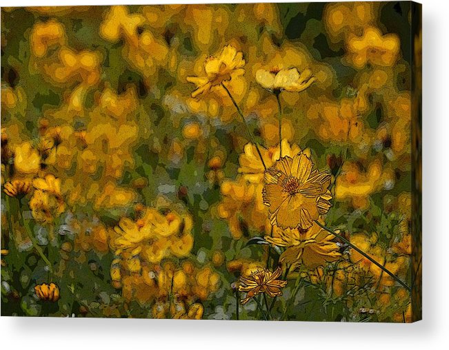 Yellow Acrylic Print featuring the photograph Summer Flowers by Ed Zirkle