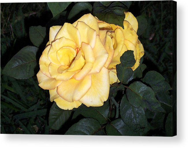 Roses Acrylic Print featuring the painting Beautiful Ones by Diana Gonzalez