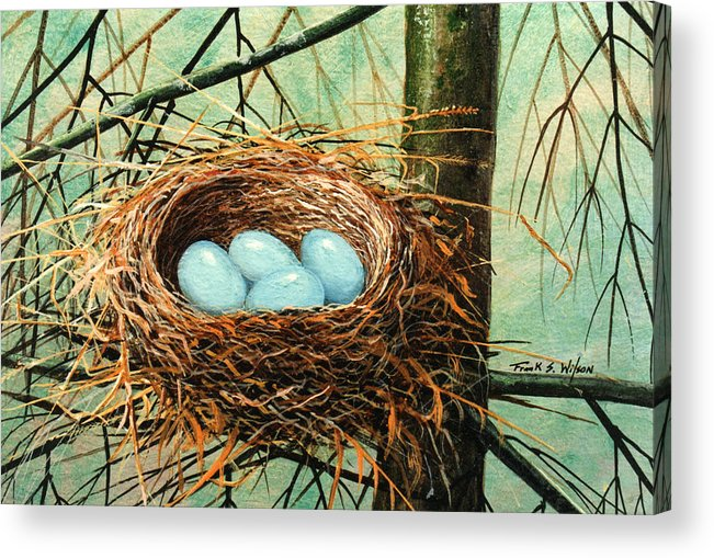 Wildlife Acrylic Print featuring the painting Blue Eggs In Nest by Frank Wilson