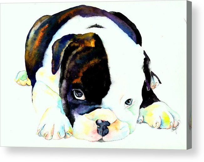 Puppy Acrylic Print featuring the painting Bulldog Puppy by Christy Freeman Stark