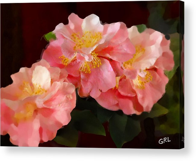 Fine Art Acrylic Print featuring the painting Camellias 1cmods1b Digital Painting Gulf Coast Florida by G Linsenmayer