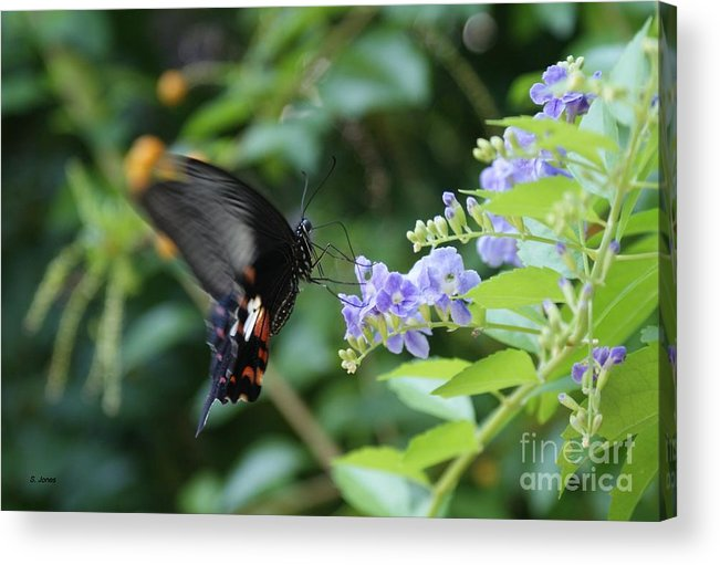Butterfly Acrylic Print featuring the photograph Fly in Butterfly by Shelley Jones