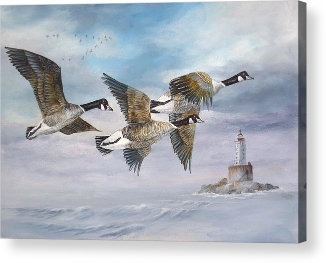 Aleutian Geese Acrylic Print featuring the painting Flying Home by Lynne Parker