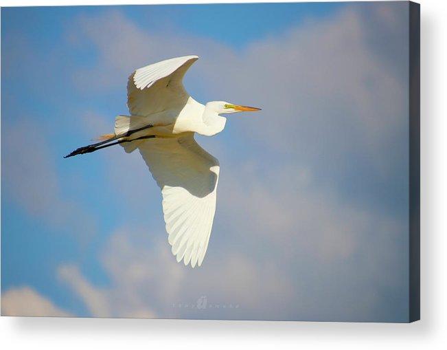 Acrylic Print featuring the photograph Free Flying by Tony Umana