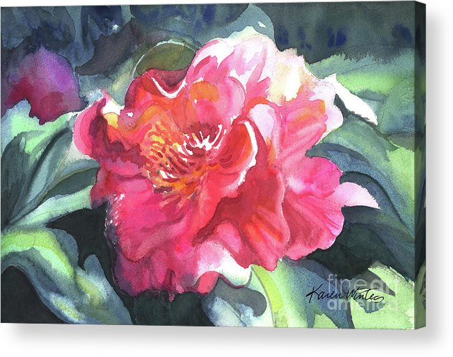 Camellia Acrylic Print featuring the painting Full Blown by Karen Winters