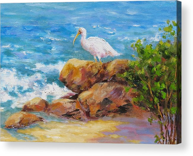 Ibis Acrylic Print featuring the painting Ibis at Seagate by Barrett Edwards