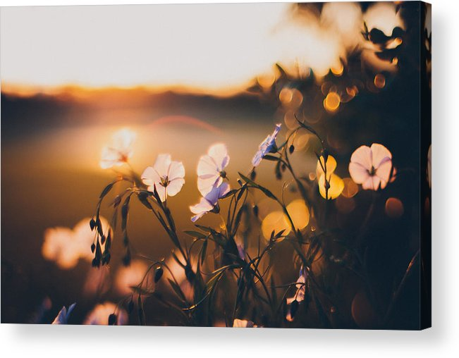 Garden Acrylic Print featuring the photograph In the Garden by Tracy Jade