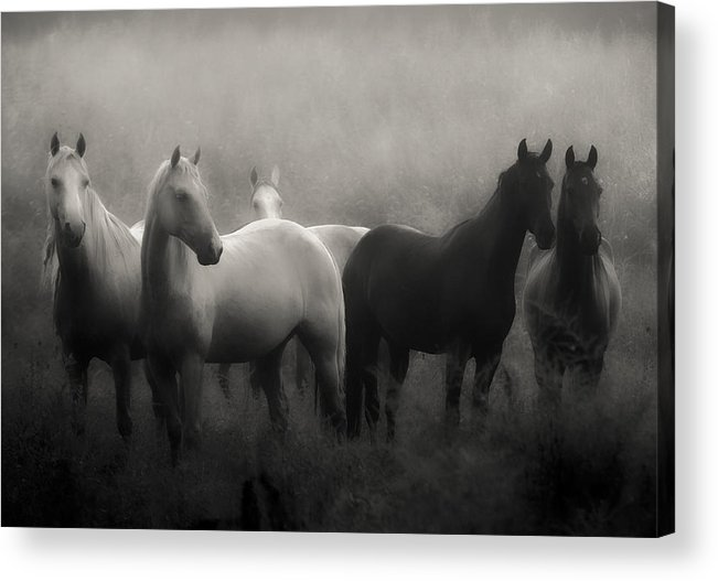 Horse Acrylic Print featuring the photograph Out of the Mist by Ron McGinnis