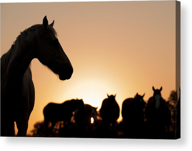 Animals Acrylic Print featuring the photograph Outcast by Ron McGinnis