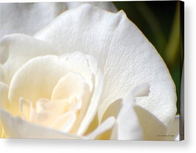 Flower Acrylic Print featuring the photograph Pure by Larry Keahey