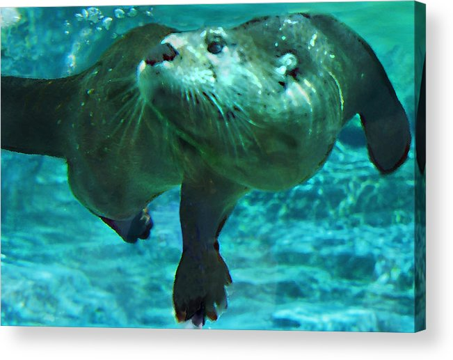 Animal Acrylic Print featuring the photograph River Otter by Steve Karol