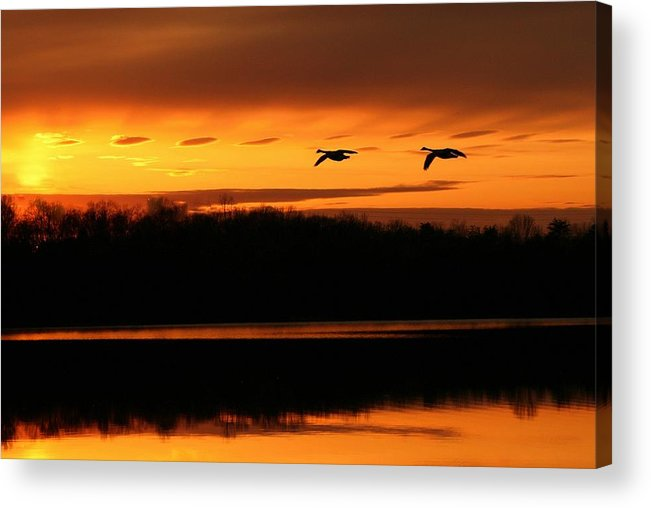 Landscape Acrylic Print featuring the photograph See Light by Mitch Cat