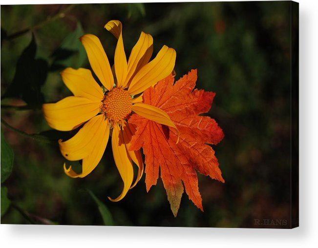 Pop Art Acrylic Print featuring the photograph Sun Flower And Leaf by Rob Hans