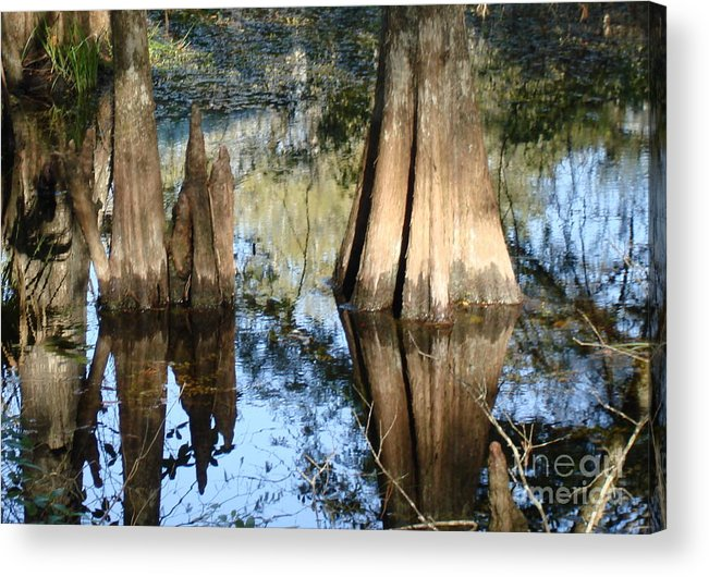 Nature Acrylic Print featuring the photograph Swampy knees by Robyn Leakey
