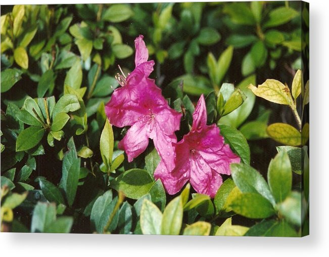 Flowers Acrylic Print featuring the photograph Twins by Brian Edward Harris