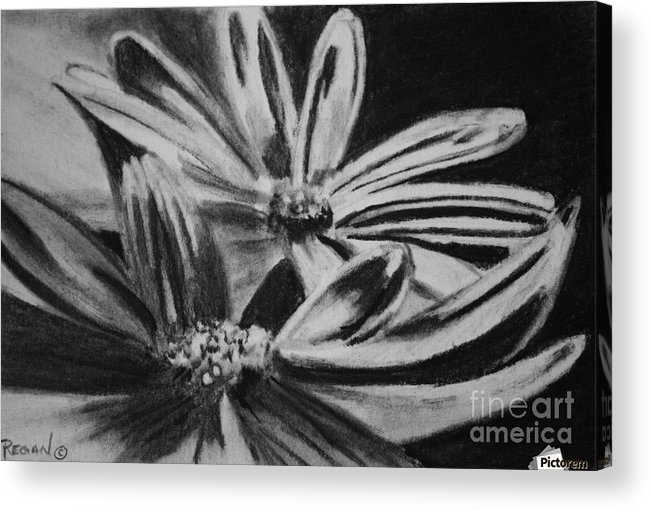 Flowers Acrylic Print featuring the drawing Two Flowers by Regan J Smith