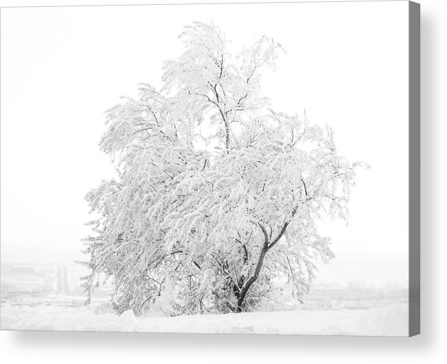 Snow Acrylic Print featuring the photograph White on White by Marilyn Hunt