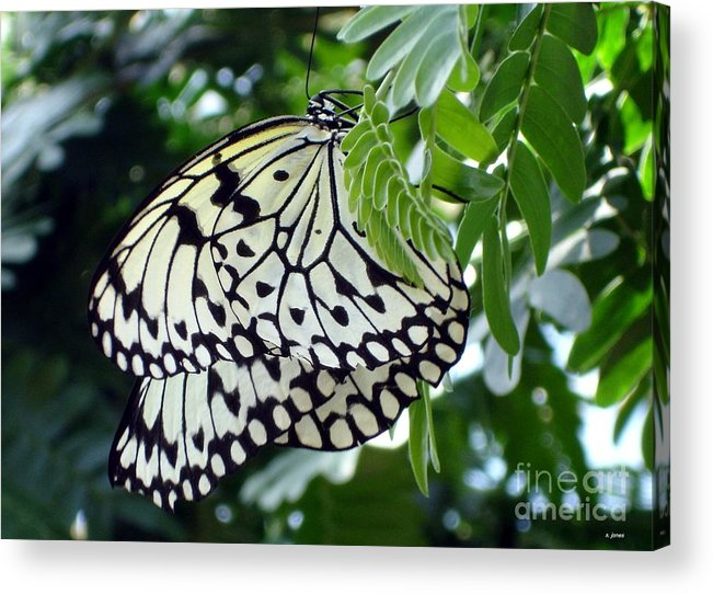 Butterfly Acrylic Print featuring the photograph Zebra in disguise by Shelley Jones